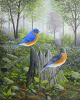 Spring Bluebirds Fine Art Print