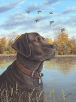 Chocolate Lab Fine Art Print