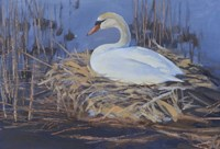 Swan Nest Fine Art Print