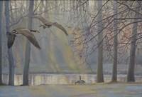 Geese An Pond Fine Art Print