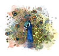 Percival The Peacock Fine Art Print