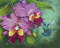 Gree Violet Eared Humming Bird Fine Art Print