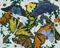 Butterfly Collage Fine Art Print