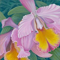 Orchid Series 4 Framed Print
