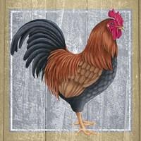 Chicken 1 Fine Art Print