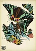 Papillons 7 Fine Art Print