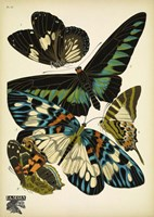 Papillons 10 Fine Art Print