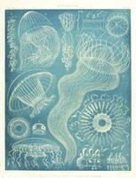 Jellyfish Sealife Fine Art Print