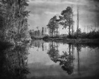 Dark Swamp Fine Art Print