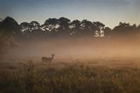 Deer at Daybreak Fine Art Print