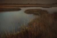 Marsh Fine Art Print