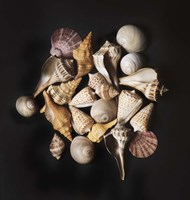 Sea Shell Collection Fine Art Print