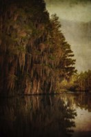 Swamp Land 2 Fine Art Print