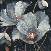 Translucent Poppies Fine Art Print