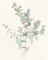 Eucalyptus II Fine Art Print