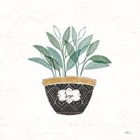 Fine Herbs VII Fine Art Print