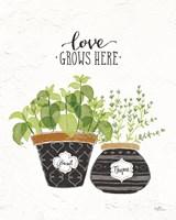 Fine Herbs V Fine Art Print