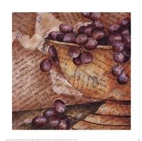 Script and Fruit I Fine Art Print