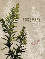 Organic Rosemary No Butterfly Fine Art Print