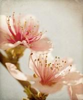 Spring Whispers 1 Fine Art Print
