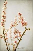 Spring Whispers 2 Fine Art Print
