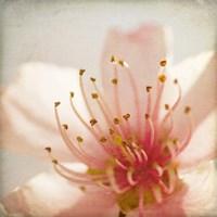 Spring Whispers 3 Fine Art Print