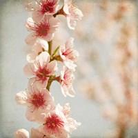 Spring Whispers 4 Fine Art Print
