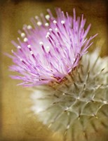 Thistle Bloom Fine Art Print