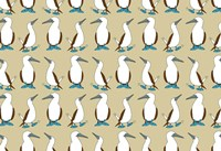 Blue Footed Booby Fine Art Print