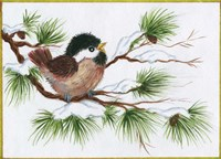 Chickadee On A Pine Tree Fine Art Print