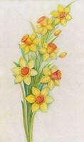 Yellow Daffodils Fine Art Print