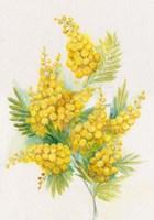 Yellow Blooms Fine Art Print