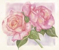 Roses 2 Fine Art Print