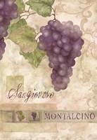 Montalcino Sangiovese 2 Fine Art Print