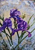 Violet Flowers Fine Art Print