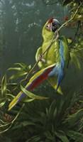 Green Parrot Fine Art Print