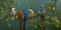 Perroquets Fine Art Print
