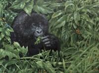 Gorilla 1 Fine Art Print