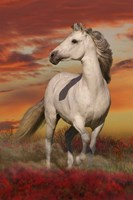 White Stallion Fine Art Print
