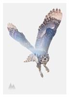 Snow Owl II Fine Art Print