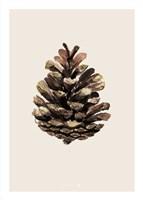 Cone Fine Art Print