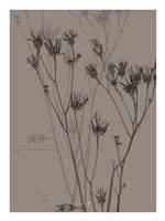 Grass Fine Art Print