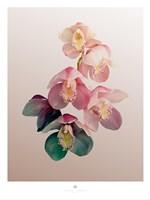 Orchidee Fine Art Print