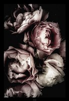Dark Rose Fine Art Print