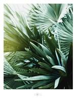 Leaf II Fine Art Print