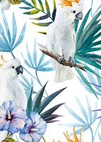 Cackatoo Fine Art Print