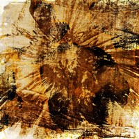 Poppy Gold II Fine Art Print