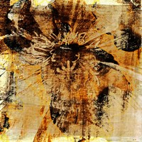 Poppy Gold III Fine Art Print