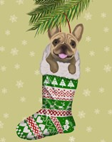 French Bulldog in Christmas Stocking Fine Art Print