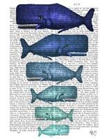 Blue Whale Family Fine Art Print
